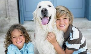 eKurs: dogoterapia, felinoterapia