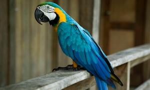 Wstęp do papugarni